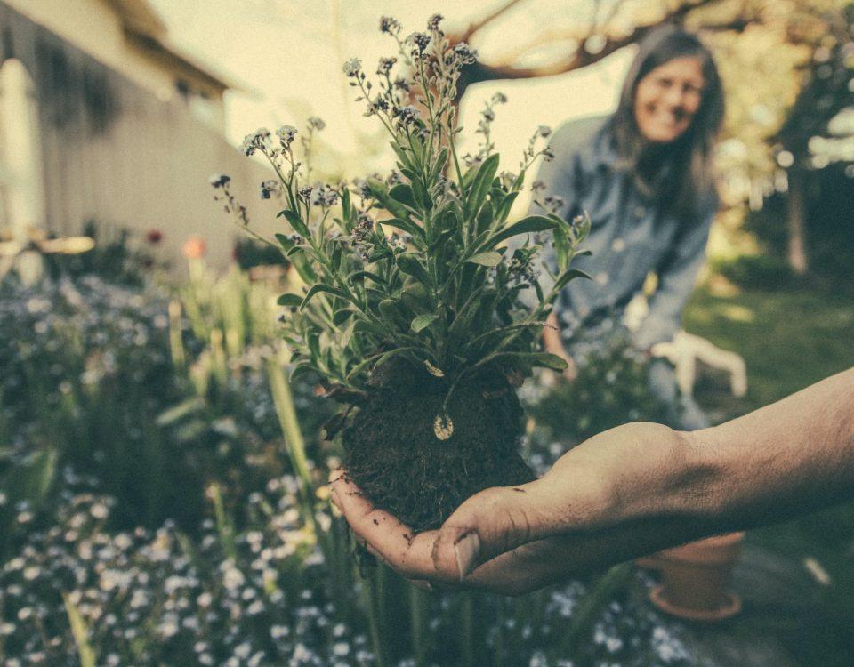 dicas de jardinagem para o inverno